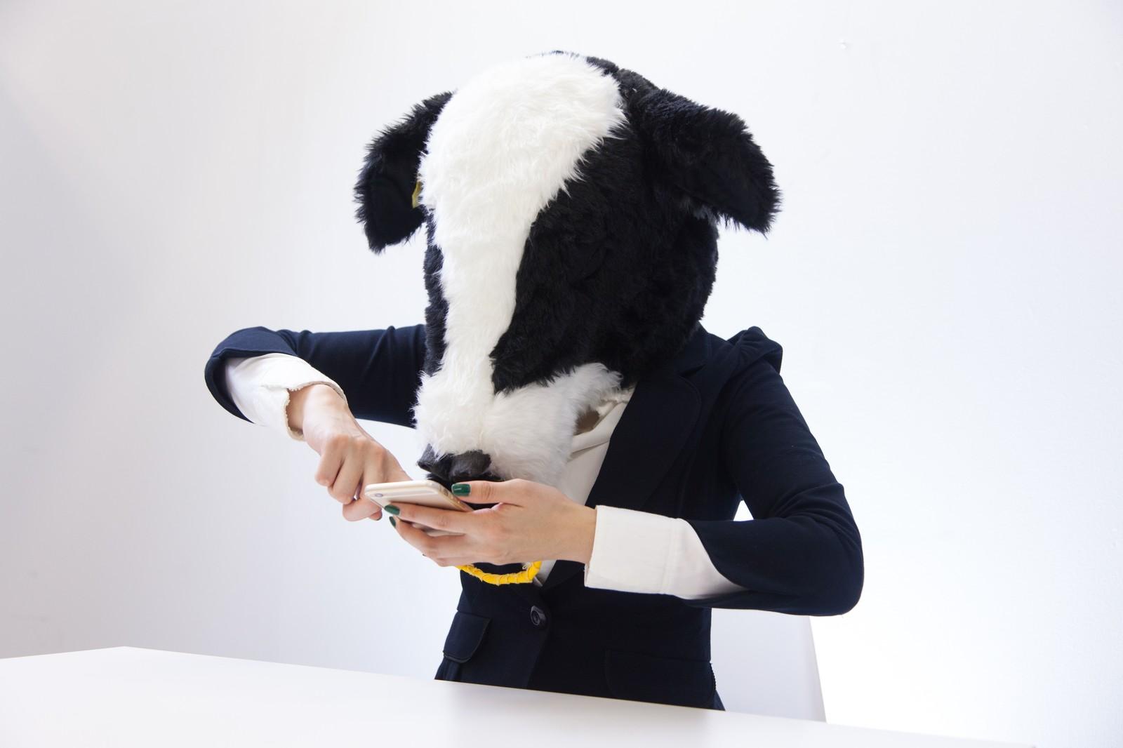 ソシャゲに勤しむ牛