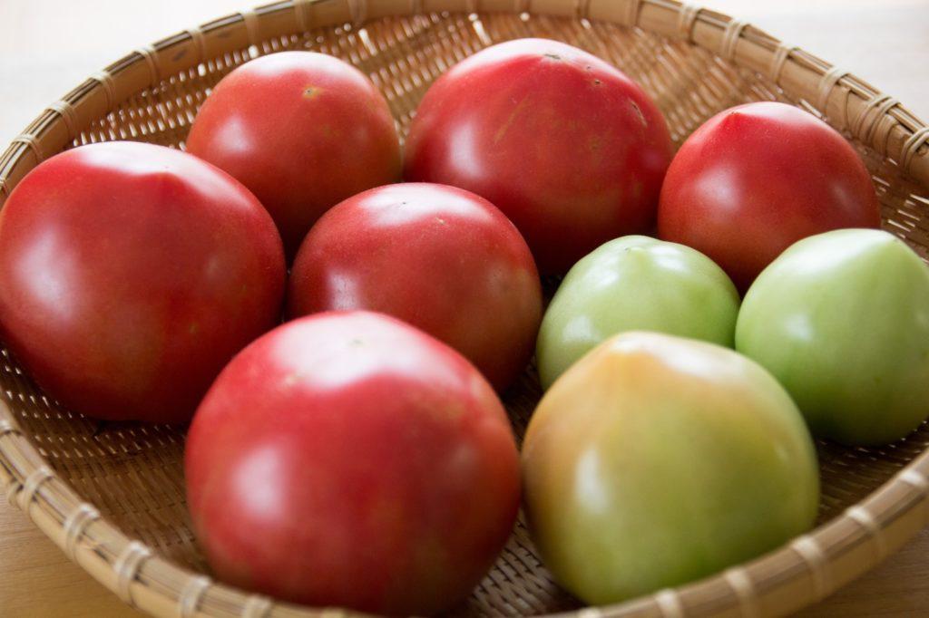 トマトには毒がある